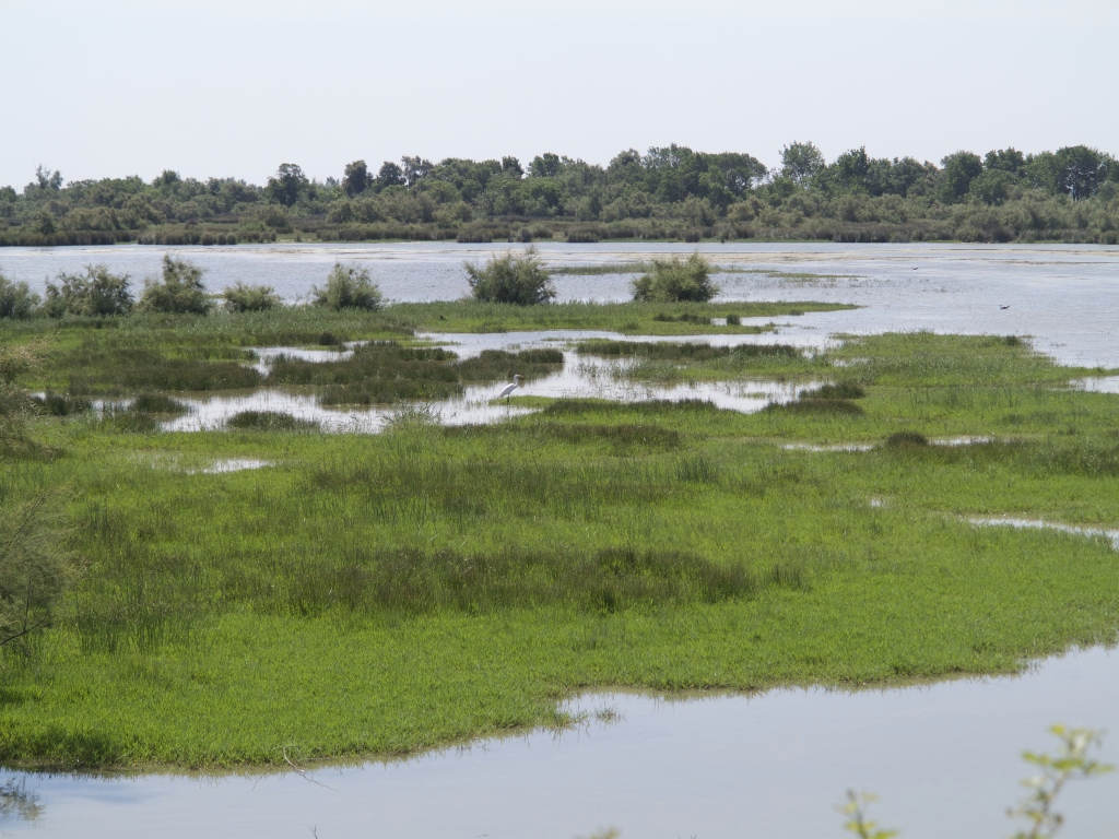 Camargue Marsh