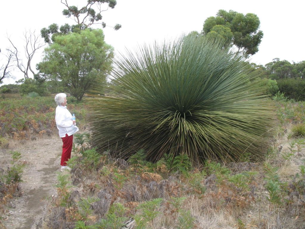 Big Weird Plants - author Ian Kent - Kangaroo Island