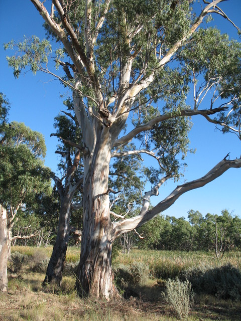 Old Gums from Author Ian Kent