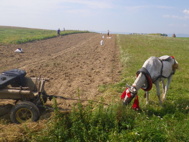 Doing it the hard way - open farm country, watching the locals either plowing a field or harvesting hay with nothing but horses Ian Kent Author