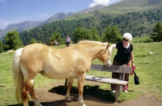 Diana with her Haflinger from Author Ian Kent